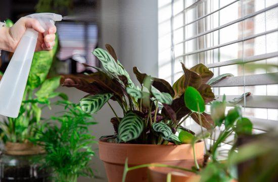 otrovne kuće biljke