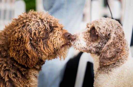 Mogu li psi da se zaljube