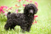 Zašto psi jedu travu