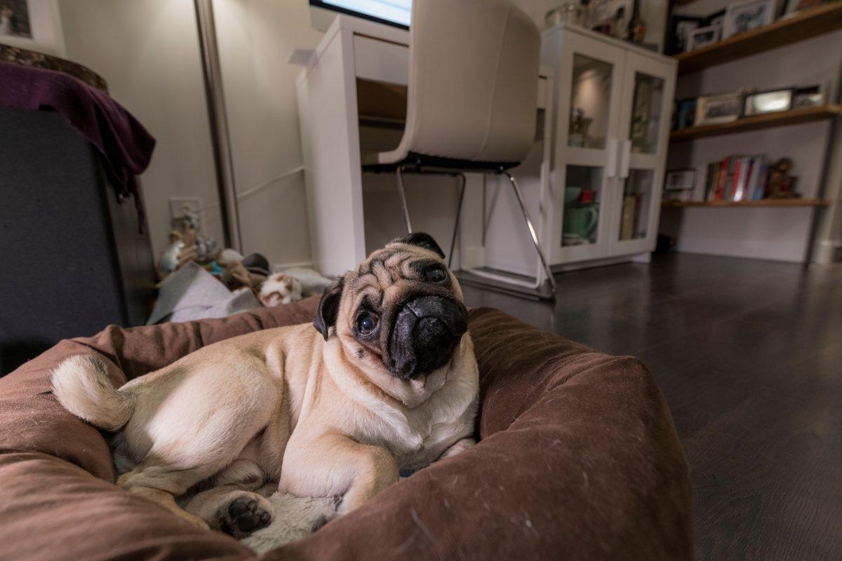 Novo istraživanje dokazuje da psi prepoznaju lažove
